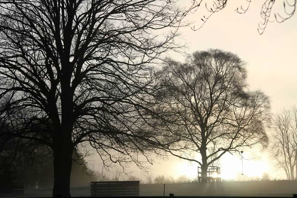 Mist at sunrise at South Lodge in the Cotswolds