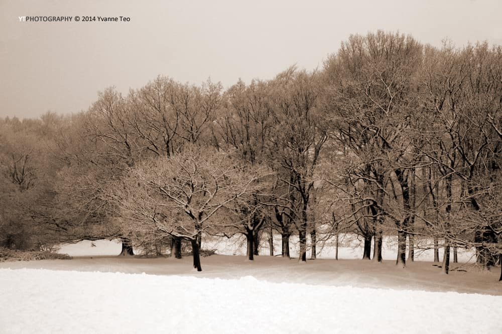 Hampstead Heath in the Snow | ytPhotography | Yvanne Teo